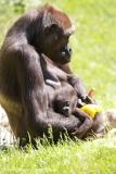 Zoo_Hannover_260517_IMG_7244