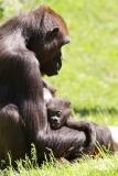 Zoo_Hannover_260517_IMG_7249