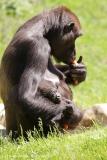 Zoo_Hannover_260517_IMG_7253