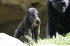 Zoo_Hannover_260517_IMG_7259