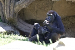 Zoo_Hannover_260517_IMG_7266