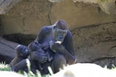 Zoo_Hannover_260517_IMG_7277