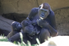 Zoo_Hannover_260517_IMG_7279