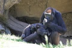 Zoo_Hannover_260517_IMG_7283