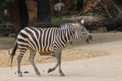 Zoo_Hannover_260615_IMG_6144