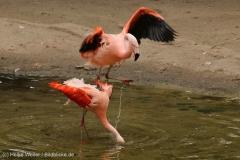 Zoo_Hannover_260615_IMG_6156