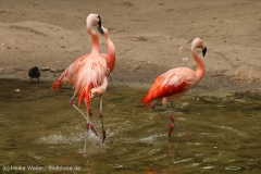 Zoo_Hannover_260615_IMG_6162