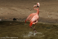 Zoo_Hannover_260615_IMG_6163