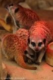 Zoo_Hannover_260615_IMG_6191