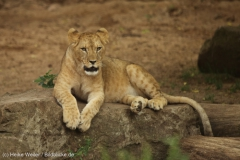 Zoo_Hannover_260615_IMG_6392