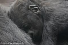 Zoo_Hannover_120427-IMG_6465