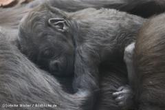 Zoo_Hannover_120427-IMG_6471