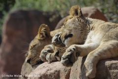 Zoo_Hannover_120427-IMG_6491
