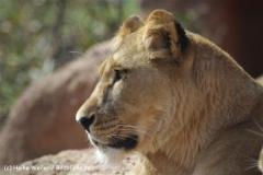 Zoo_Hannover_120427-IMG_6497