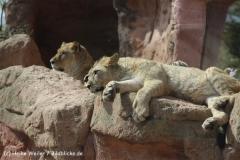 Zoo_Hannover_120427-IMG_6501
