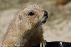 Zoo_Hannover_120427-IMG_6525