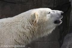 Zoo_Hannover_120427-IMG_6539