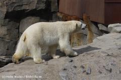 Zoo_Hannover_120427-IMG_6552