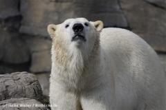 Zoo_Hannover_120427-IMG_6554