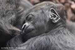 Zoo_Hannover_120427-IMG_6475