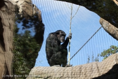 Zoo_Hannover_270913_IMG_4640