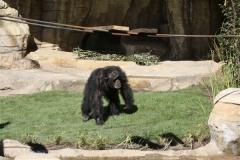Zoo_Hannover_270913_IMG_4668