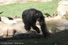 Zoo_Hannover_270913_IMG_4671