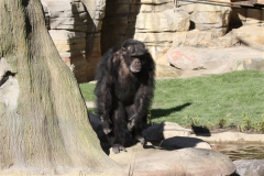 Zoo_Hannover_270913_IMG_4678