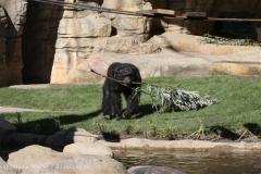 Zoo_Hannover_270913_IMG_4682