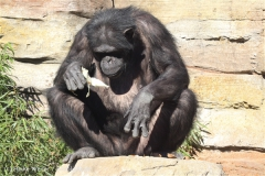 Zoo_Hannover_270913_IMG_4685
