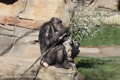 Zoo_Hannover_270913_IMG_4686
