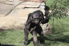 Zoo_Hannover_270913_IMG_4690