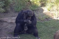 Zoo_Hannover_270913_IMG_4691