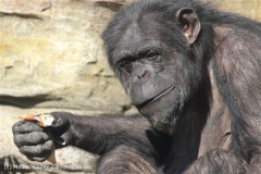 Zoo_Hannover_270913_IMG_4700