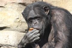 Zoo_Hannover_270913_IMG_4707