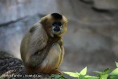 Zoo_Hannover_270913_IMG_4727