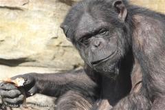 Zoo_Hannover_270913_IMG_4701