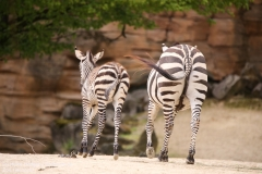 Zoo_Hannover_280417_IMG_4419
