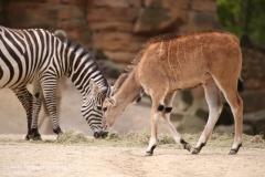 Zoo_Hannover_280417_IMG_4422