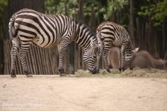 Zoo_Hannover_280417_IMG_4424