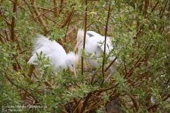 Zoo_Hannover_280417_IMG_4439