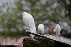 Zoo_Hannover_280417_IMG_4457