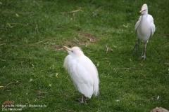 Zoo_Hannover_280417_IMG_4462