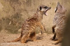 Zoo_Hannover_280417_IMG_4476