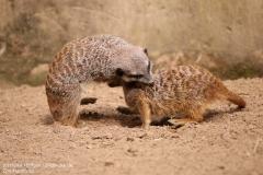 Zoo_Hannover_280417_IMG_4481