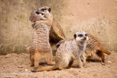Zoo_Hannover_280417_IMG_4495