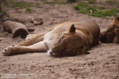 Zoo_Hannover_280417_IMG_4519