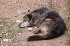 Zoo_Hannover_280417_IMG_4524