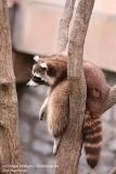 Zoo_Hannover_280417_IMG_4528