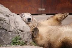 Zoo_Hannover_280417_IMG_4540